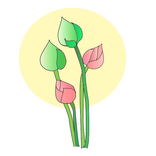 Tulip flower vector