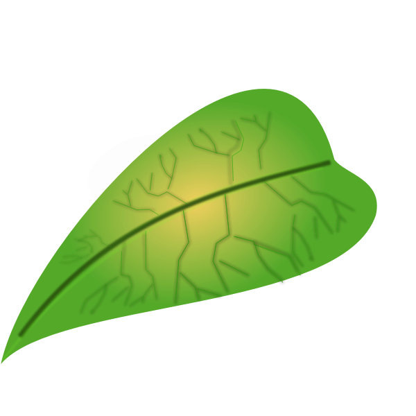 Meaty green leaf