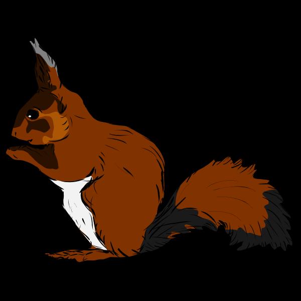 Squirrel-1571484848