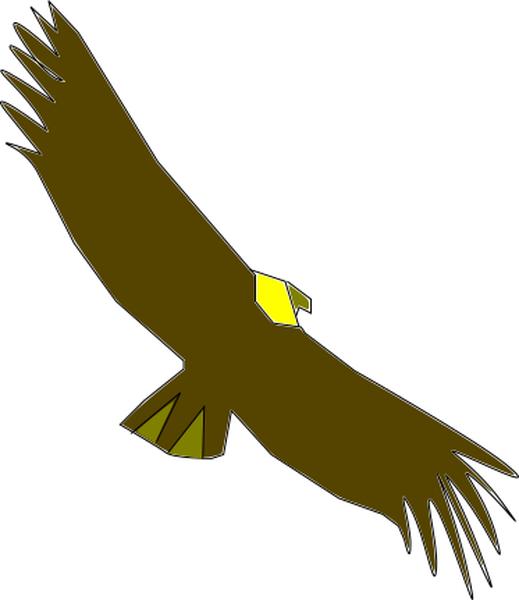 Condor Colombiano