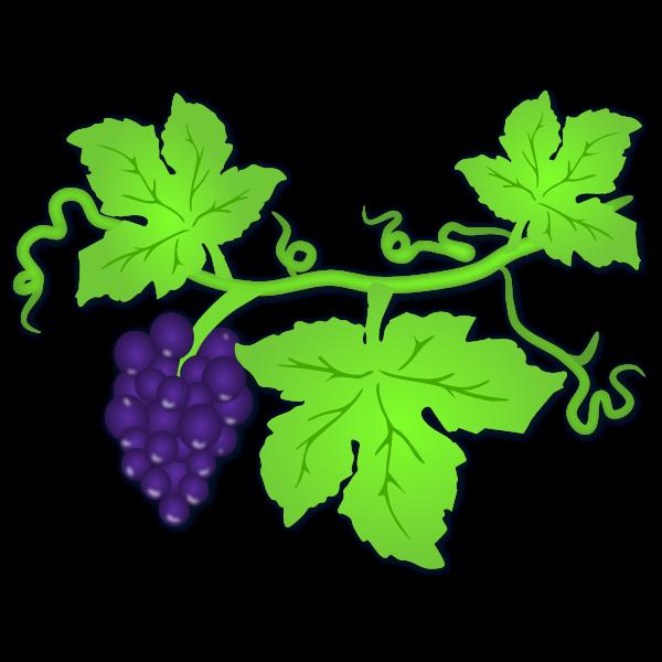 Vector illustration of ripe grapes