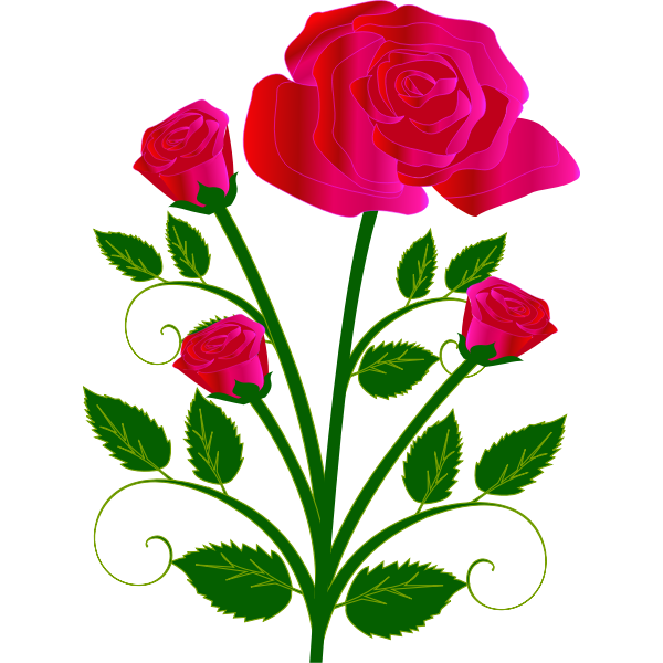 Vector graphics of four roses on one stam