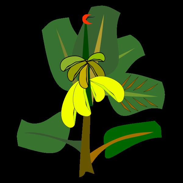 Banana tree with ripe fruits vector illustration