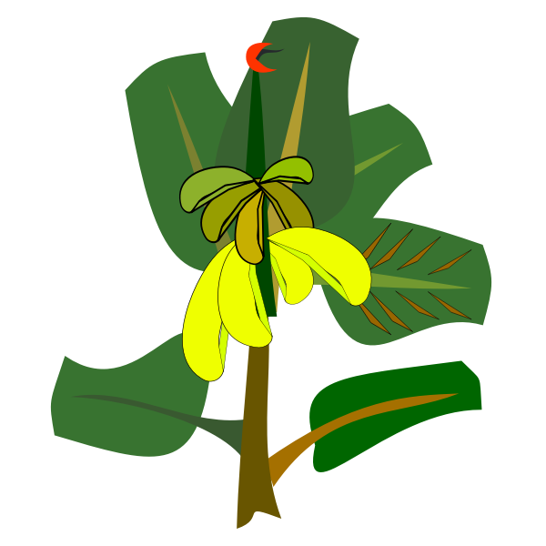 Banana tree with ripe fruits vector illustration