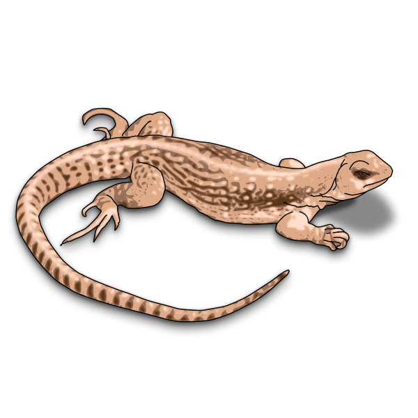 Illustration of brown lizard with shadows
