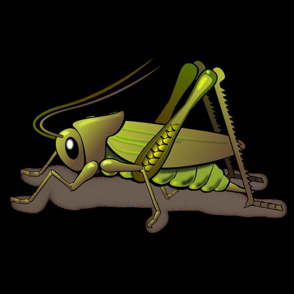 """Resultado de imagen para cricket insect"""""""