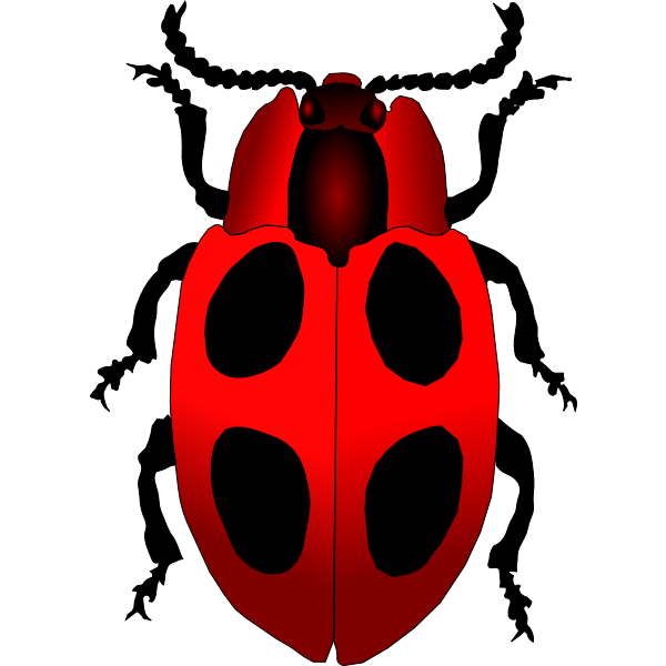 Vector image of a cartoon ladybug inscet