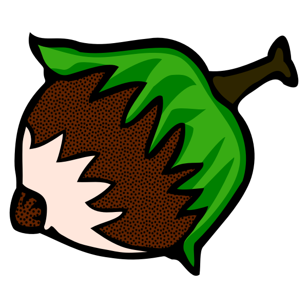Drawing of ripe hazelnut line art in color