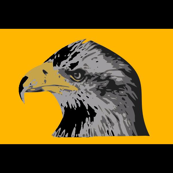 Head of a bald eagle vector drawing