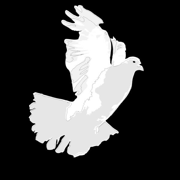 White Dove / White Pigeon