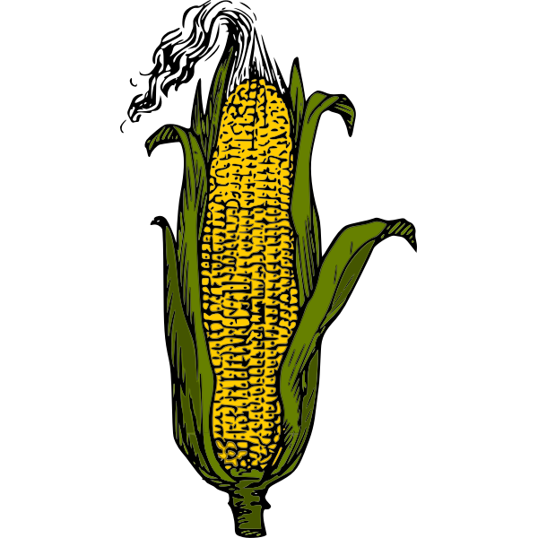 Yellow corn cob