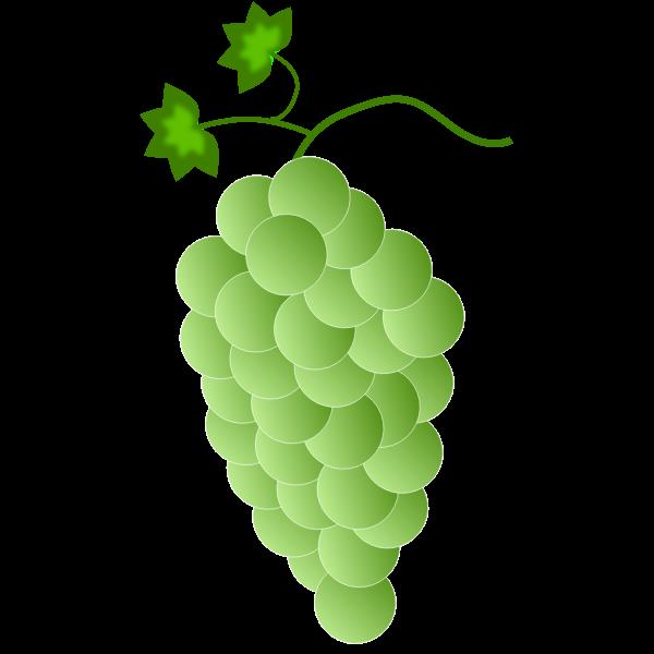 Green-white grapes