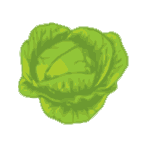 Green cabbage