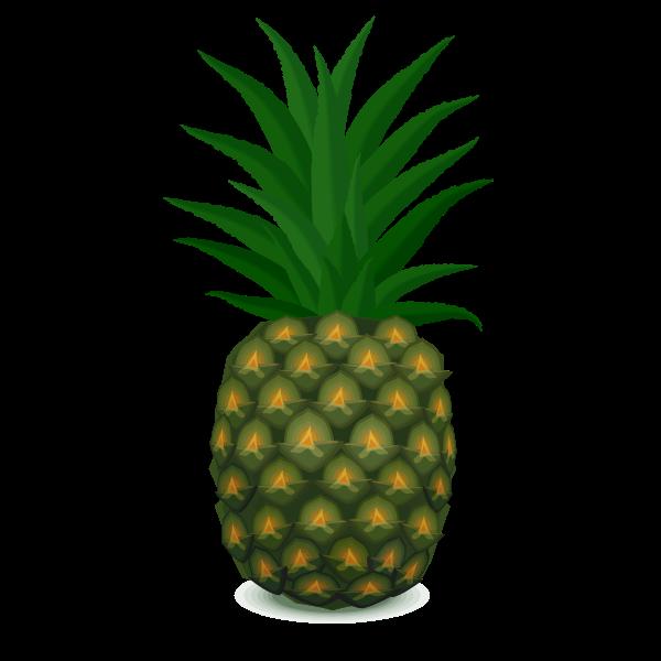 Green pineapple vector image