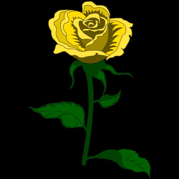Rose 27 (colour 2)