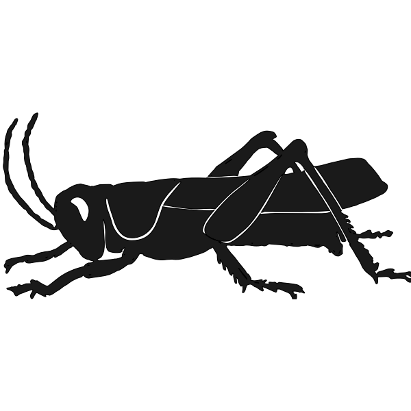 Grashopper silhouette