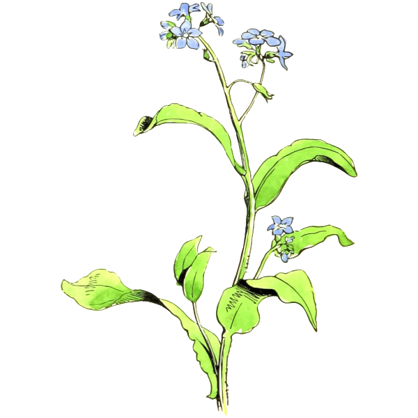 Flower 194