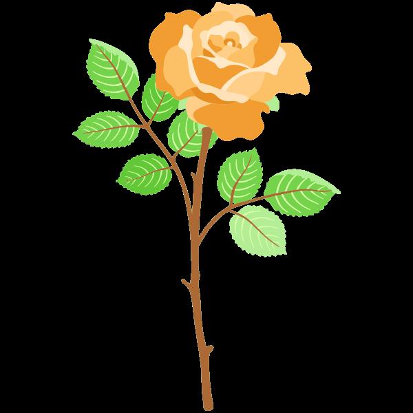 Rose 30 (version 2)