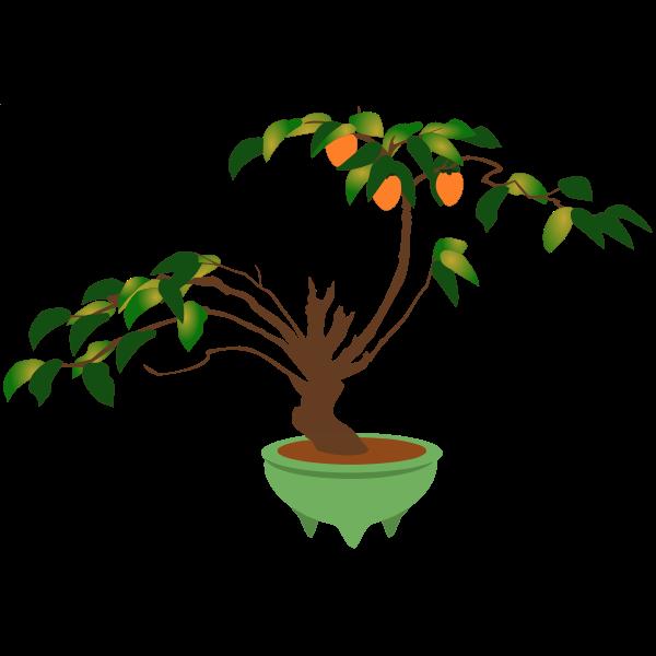 Persimmon bonsai tree
