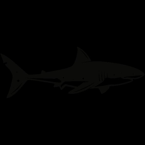 Shark (#4)