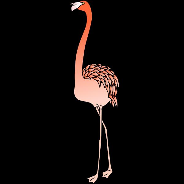 Flamingo 4 (colour)