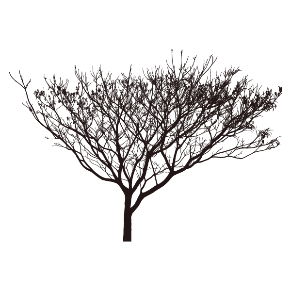 Scrawny Tree Silhouette