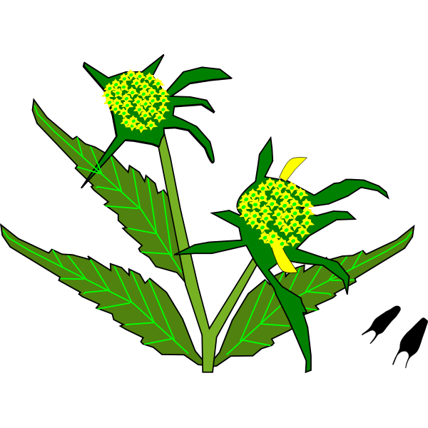 Beggar Ticks Flower Plant