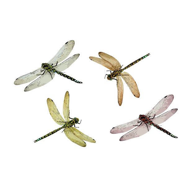 4 dragonflies