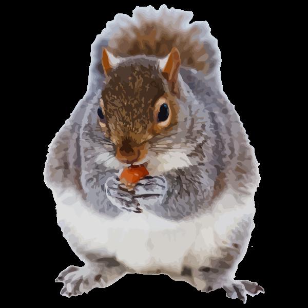 nom squirrel