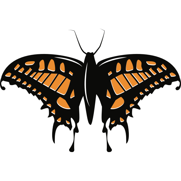 Butterfly insect silhouette