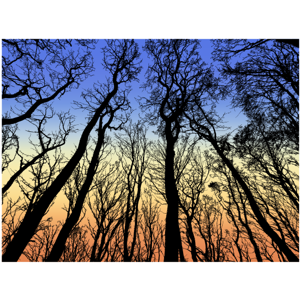 Forest in the Morning Sky