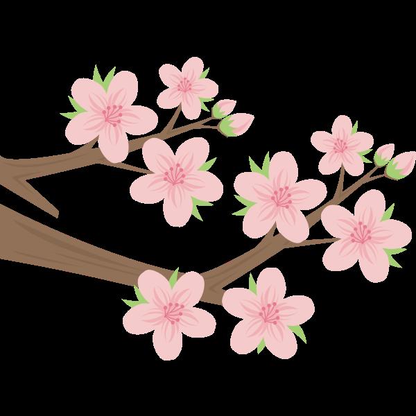 Sakura (#2)