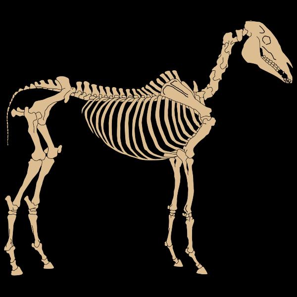 Horse Skeleton By NinaYSo