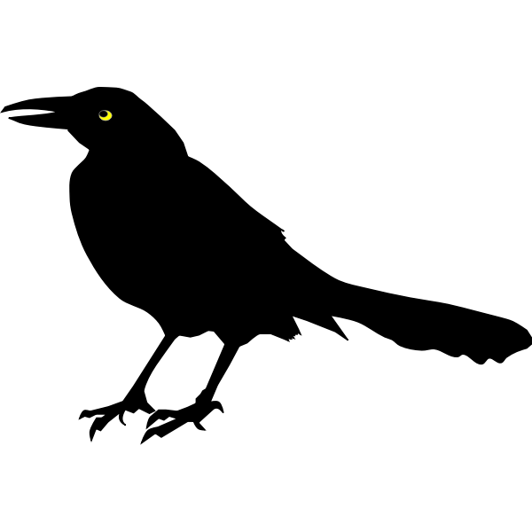 Grackle Blackbird