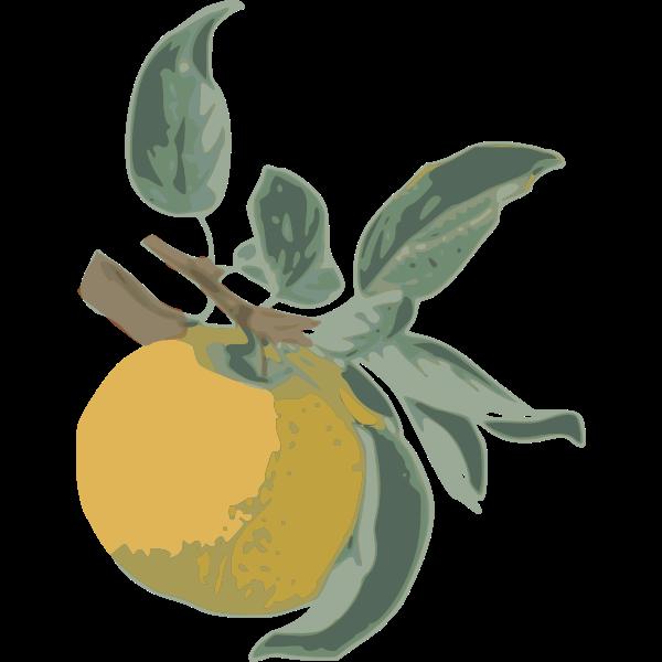 Yellow Apple-1574850711