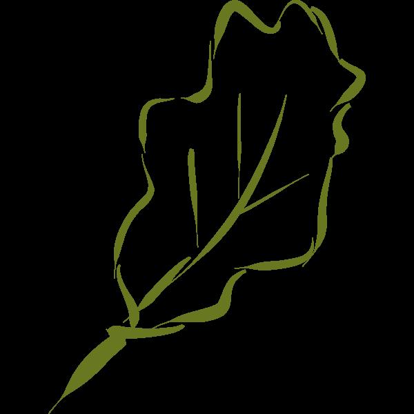 Oak leaf-1577293597