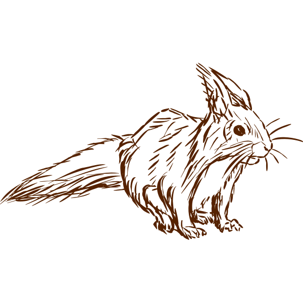 Squirrel-1577296185