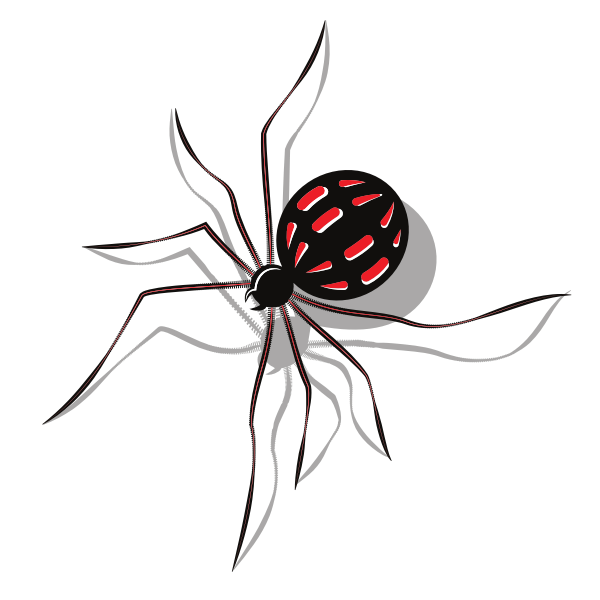 Spider insect