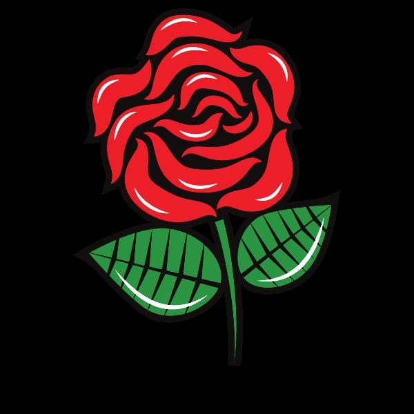 Red rose vector sketch