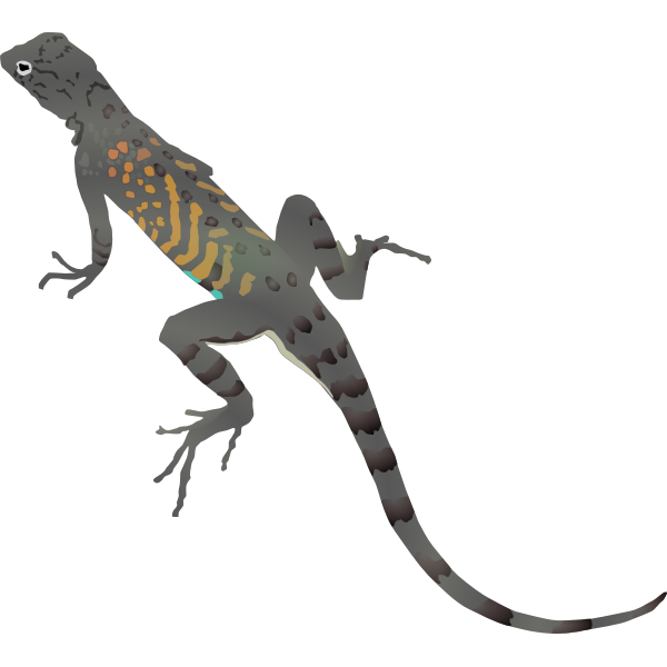 Illustration of colorful lizard