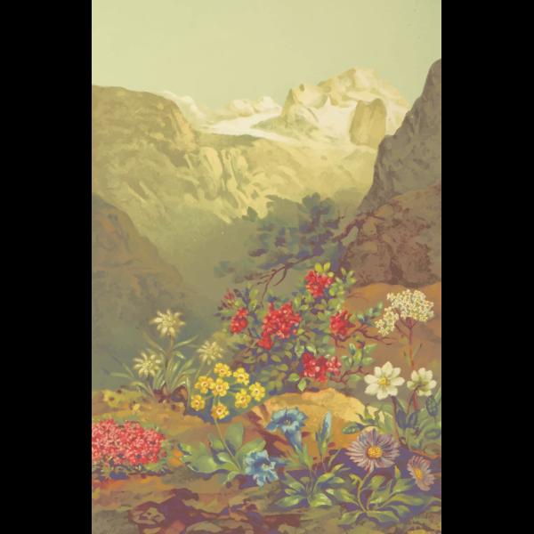 AlpinePlants