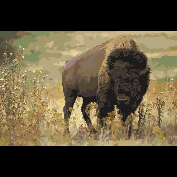 American bison k5680 1 2016052834