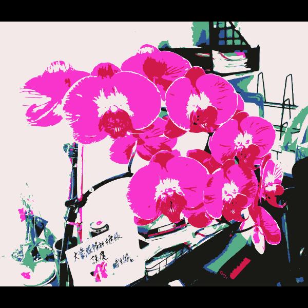 An orchid for jilllio