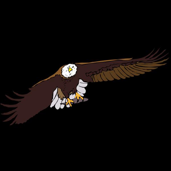 Bald eagle vector graphics
