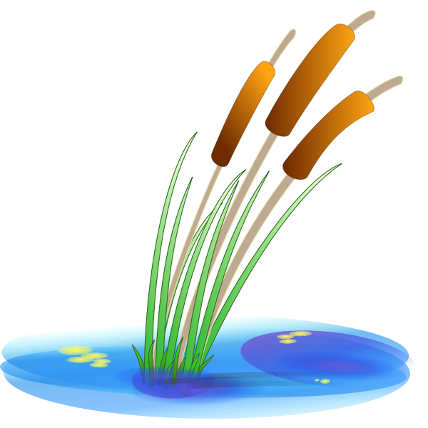 Vector illustration of reed