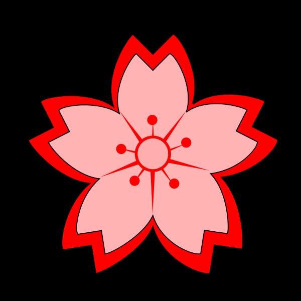 Sakura flower vector image