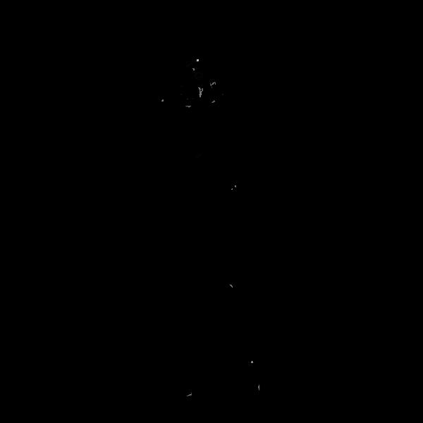 Ant Queen-1573660015