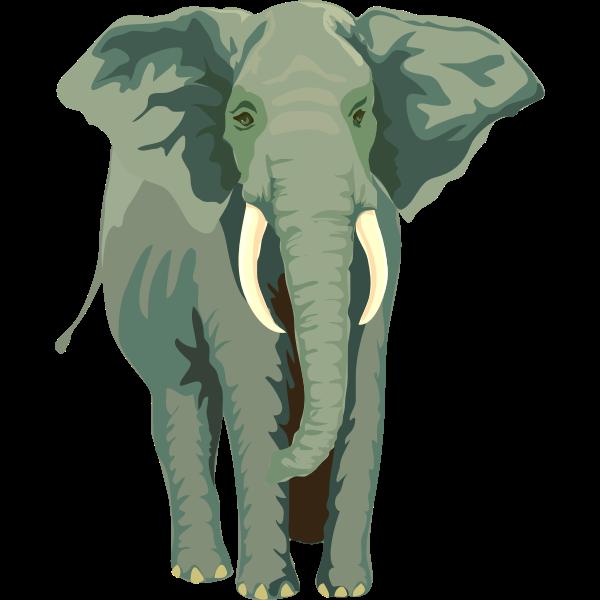 Architetto -- Elefante 01