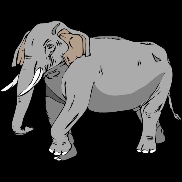 Architetto -- Elefante 02