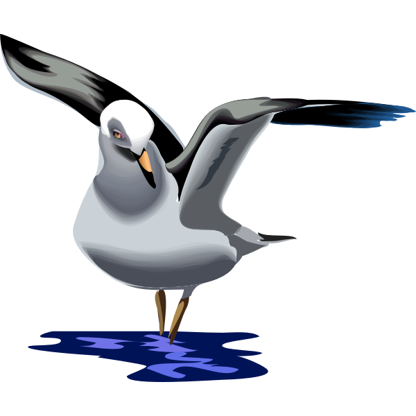 Vector graphics of seagull flying up